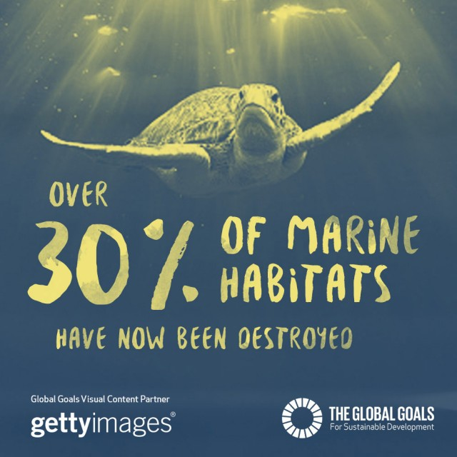 Over 30% of marine habitats have now been destroyed
